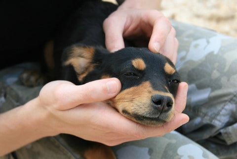 Woman massing a small black and brown puppy
