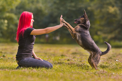Everything you need to know about fish oil for dogs for What does fish oil do for dogs