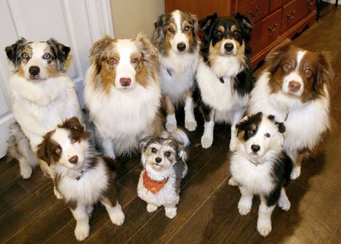 Group of dogs staring at camera
