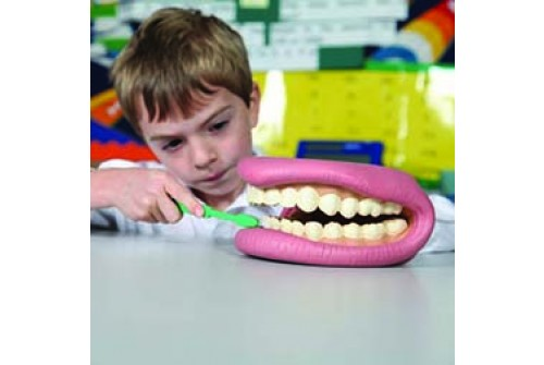 Giant Teeth Demonstration Model
