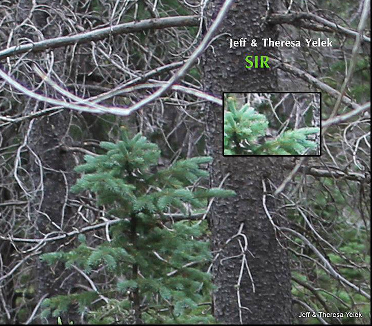 Image of Colorado Bigfoot?