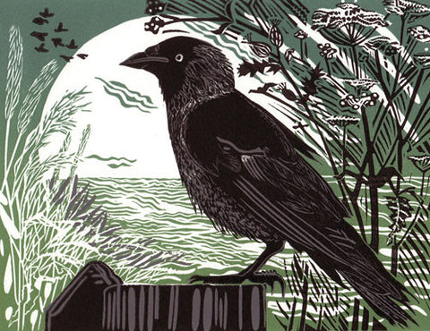 Jackdaw by Pam Grimmond (Limited Edition Print)