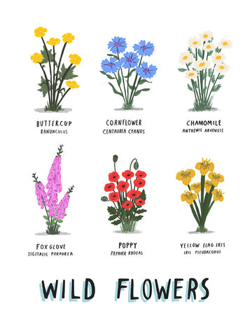 Wild Flowers print by Alex Foster (Limited Edition Print)