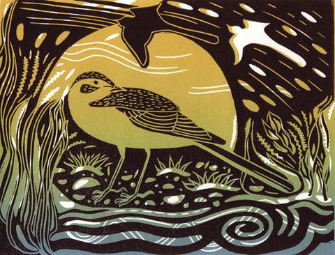 Yellow Wagtail 2 by Pam Grimmond (Limited Edition Print)