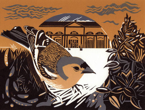 Chaffinch by Pam Grimmond (Limited Edition Print)