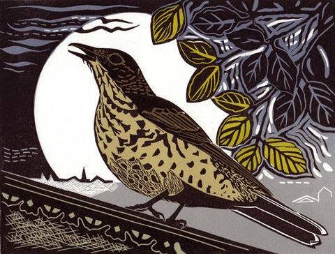 Mistle Thrush by Pam Grimmond (Limited Edition Print)