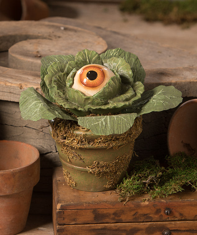 Eerie Eyeball Lettuce
