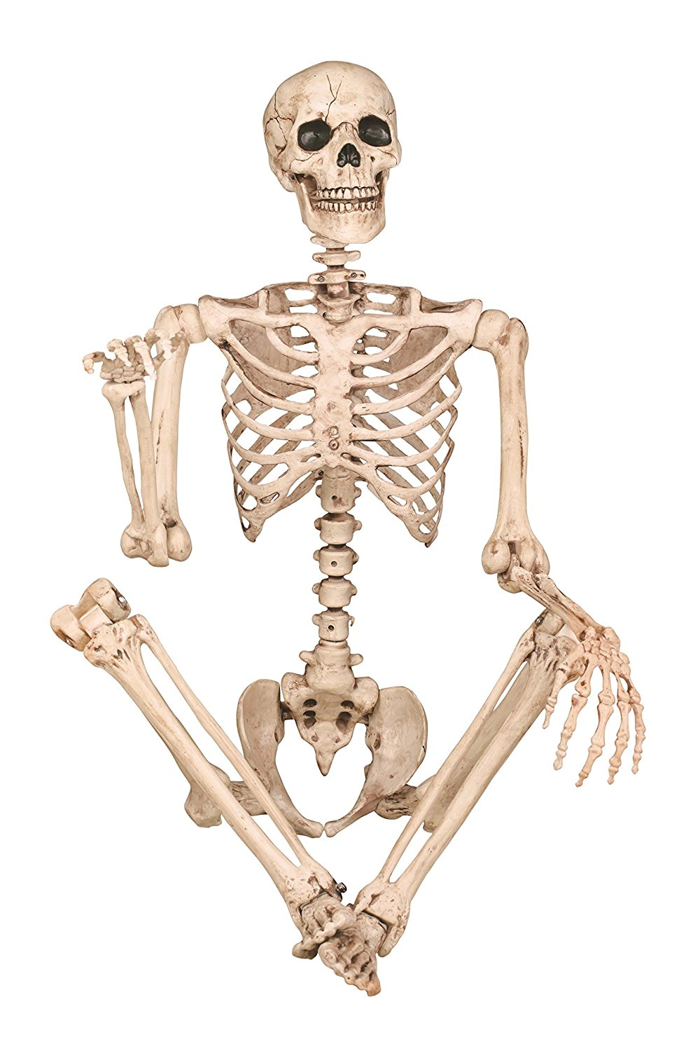 Posable Plastic Skeleton Prop