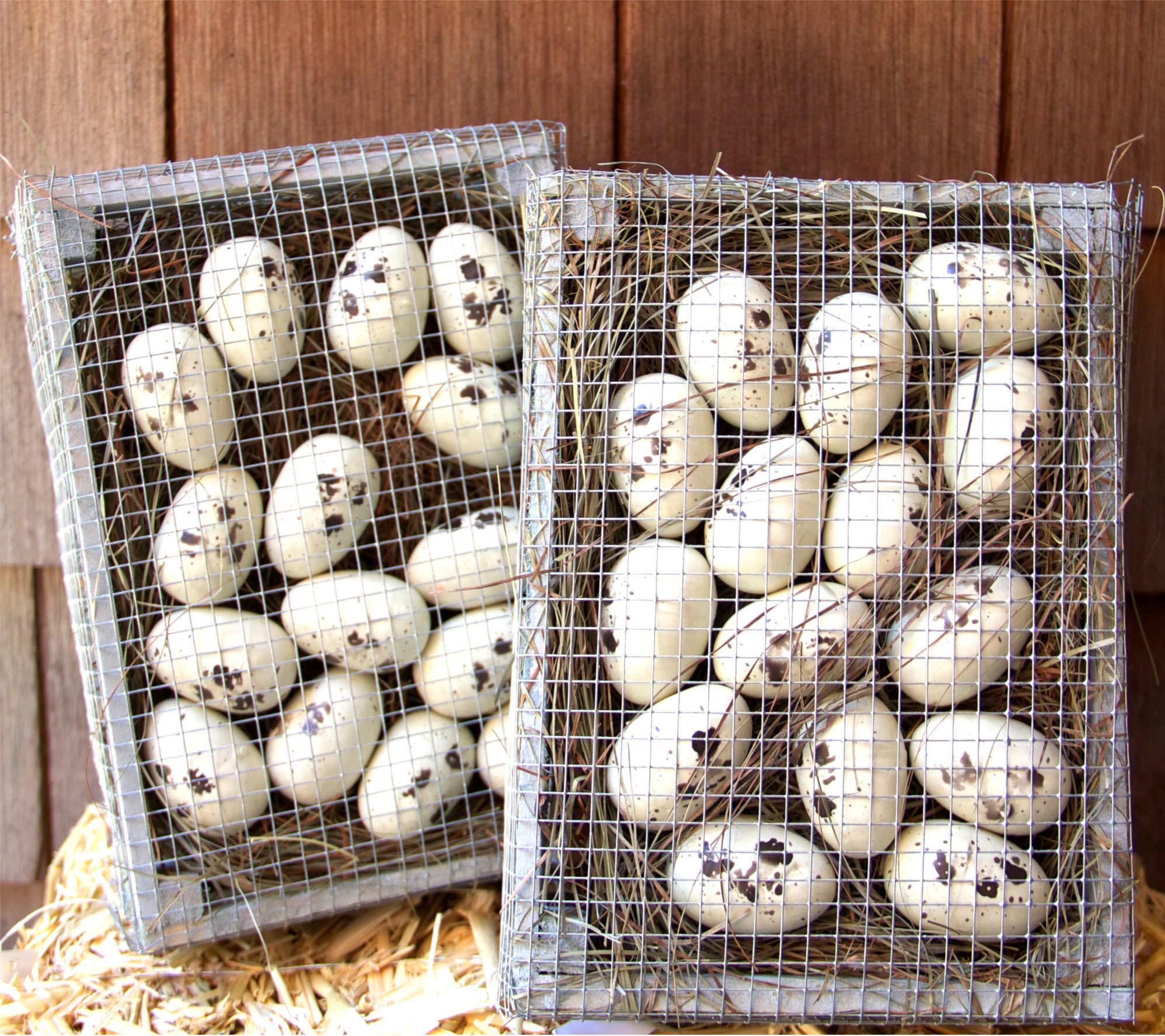 Egg Crate with Speckled Eggs | Farmhouse Decoration