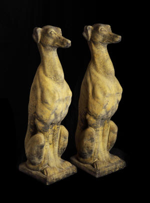 Pair Sitting Greyhounds