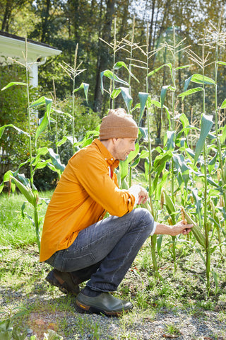 Man crouching down near corn stocks