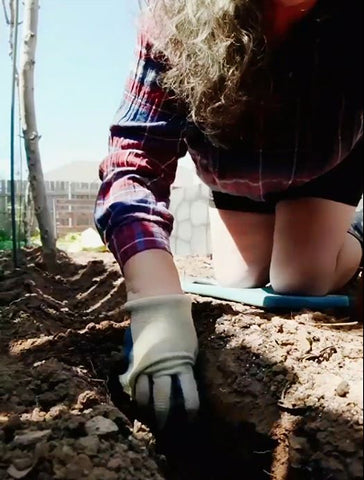 Dig a trench a little higher than the height of your pot all the way down the line where you want to plant