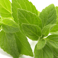 Melissa Officinalis (Balm Mint) Leaf Extract