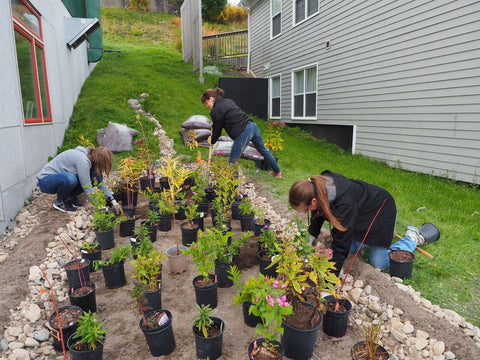 ACAP Saint John Team Building Rain Garden at Social Enterprise HUB in Saint John, New Brunswick