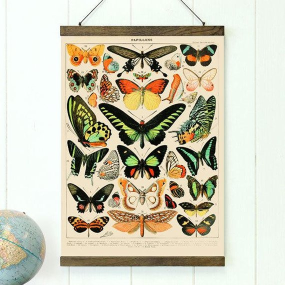 Educational Butterfly Canvas Diagram - Art Print Club