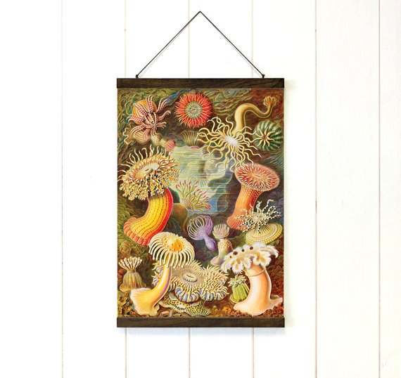 Anemone Varieties Pull Down Chart Vintage Canvas - Art Print Club