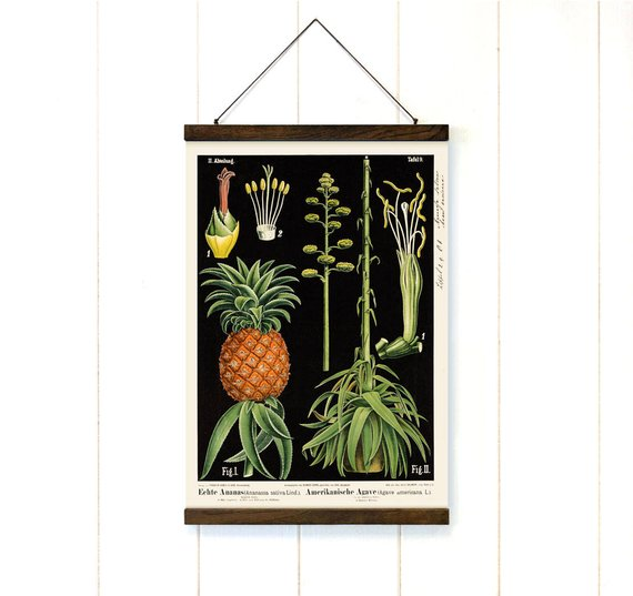 Pineapple and Agave Pull Down Canvas - Art Print Club