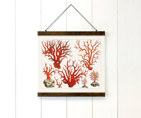 Vibrant Red Sea Coral Canvas Print