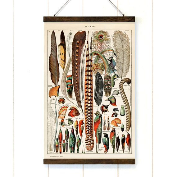 Birds and Feathers Pull Down Canvas - Art Print Club
