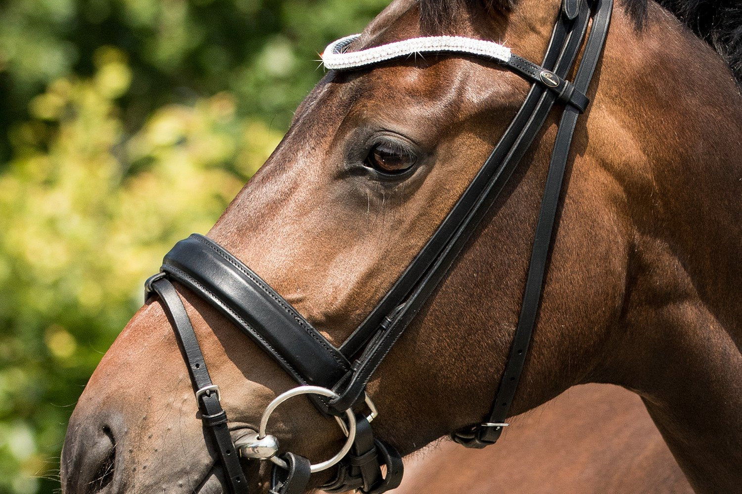 Dressage Snaffle Bridles
