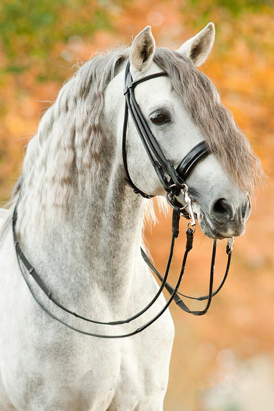 New Year, New Bridle!
