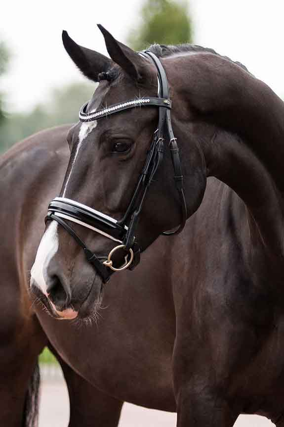 Snaffle Bridles