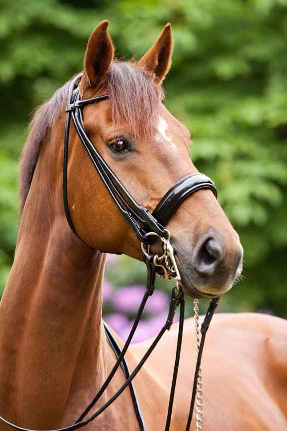 Double Bridles