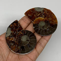 "69.4g, 2.6""x2.1""x0.4"", 1 Pair Half Cut Ammonite Polished Mineral @Madagascar, F2"