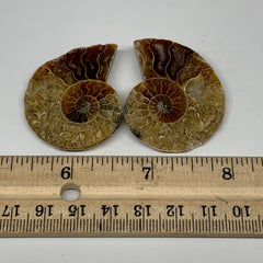 "21.1g, 1.7""x1.4""x0.3"", 1 Pair Half Cut Ammonite Polished Mineral @Madagascar,F22"