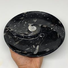 "852g, 8.25"" Black Round Fossils Orthoceras Ammonite Bowl Ring @Morocco, F307"