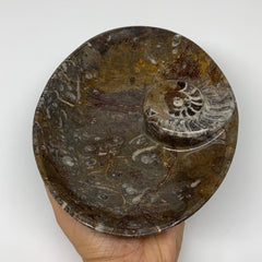 "862g, 8.75""x6.6"" Red/Brown Fossils Ammonite Bowl Oval Ring Shape @Morocco,F320"