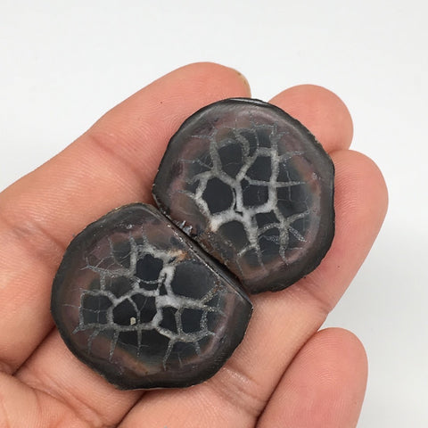 "1 Pair,22.1g,1.2""x1"" Natural Unique Septarian Nodules Slabs @Morocco,MF3556"