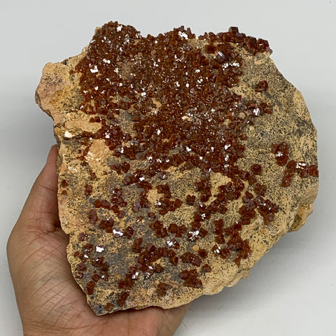 "1358g, 6""x6""x2.3"", Vanadinite Crystals Cluster Mineral Specimens @Morocco,B11258"