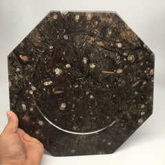 "2pcs set, 12"" Large Octagon Shape Fossils Ammonite Plates Brown from Morocco"