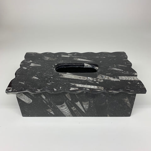"2.4kg, 10.5""x6.25"" Black Fossils Orthoceras Tissue Paper Box Cover @Morocco,F439"