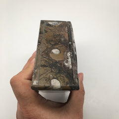 510 Grams Triangular Orthoceras Fossil Ammonite Brown Jewelry Box @Morocco,FM428 - watangem.com