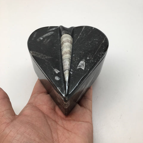 412 Grams Heart Fossils Orthoceras Handmade Black Jewelry Box @Morocco,MF518