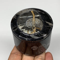 "213.8g, 2.1""x2.4"" Black Fossils Ammonite Orthoceras Jewelry Box @Morocco,F2584"