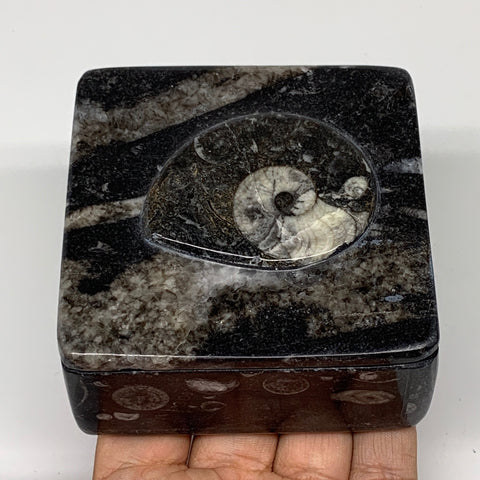 "362g, 3.2""x1.6"", Fossils Ammonite Orthoceras Square Jewelry Box @Morocco,F2614"
