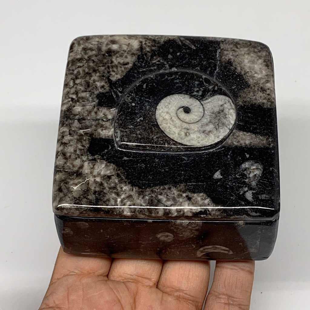 "348g, 3.2""x1.6"", Fossils Ammonite Orthoceras Square Jewelry Box @Morocco,F2617"