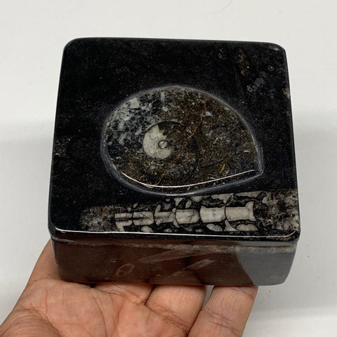 "352g, 3.2""x1.7"", Fossils Ammonite Orthoceras Square Jewelry Box @Morocco,F2620"
