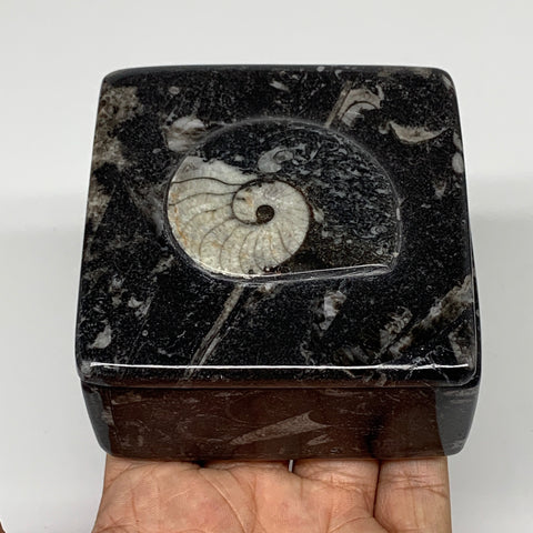 "370g, 3.2""x1.7"", Fossils Ammonite Orthoceras Square Jewelry Box @Morocco,F2621"