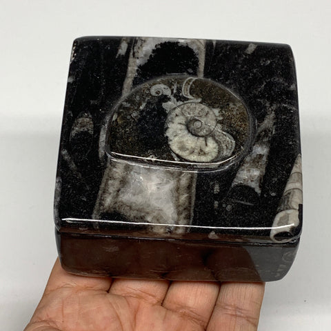 "352g, 3.2""x1.6"", Fossils Ammonite Orthoceras Square Jewelry Box @Morocco,F2626"