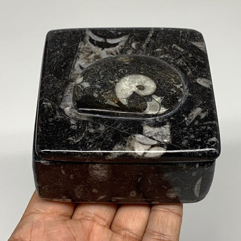 "354g, 3.2""x1.7"", Fossils Ammonite Orthoceras Square Jewelry Box @Morocco,F2628"