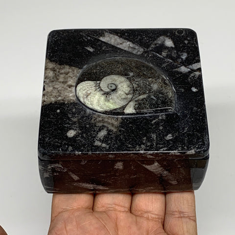 "376g, 3.2""x1.7"", Fossils Ammonite Orthoceras Square Jewelry Box @Morocco,F2630"