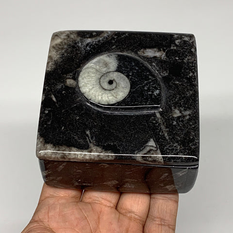 "346g, 3.2""x1.7"", Fossils Ammonite Orthoceras Square Jewelry Box @Morocco,F2633"