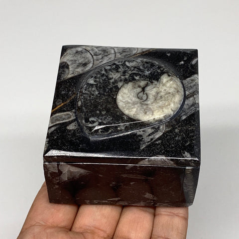 "258.8g, 2.5""x1.8"", Fossils Ammonite Orthoceras Square Jewelry Box @Morocco,F2659"