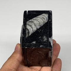 "268.5g, 2.5""x1.9"", Fossils Ammonite Orthoceras Square Jewelry Box @Morocco,F2663"