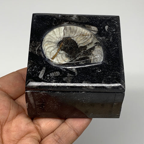 "248.7g, 2.5""x1.8"", Fossils Ammonite Orthoceras Square Jewelry Box @Morocco,F2664"