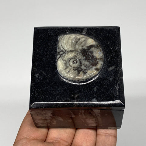 "272.5g, 2.5""x1.8"", Fossils Ammonite Orthoceras Square Jewelry Box @Morocco,F2668"